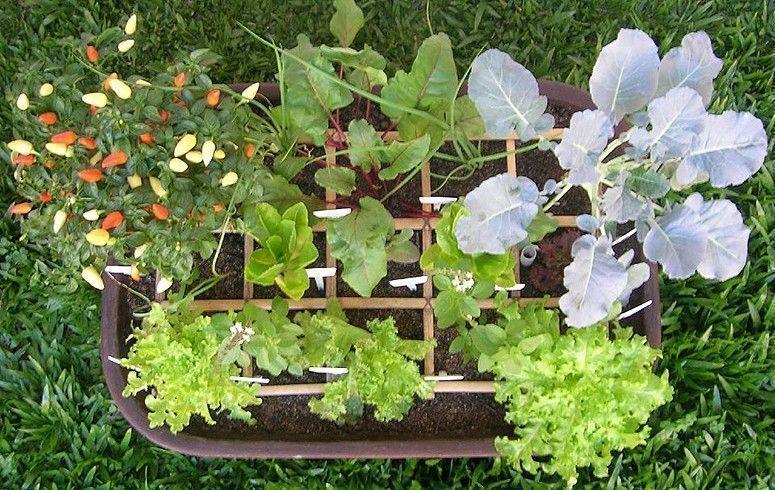 Foto: Reproducción / Vegetable Garden Zen