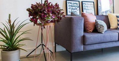Plantas en la decoración: crea ambientes más bonitos y acogedores