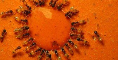 Guerra contra las hormigas: soluciones caseras y consejos para exterminarlas