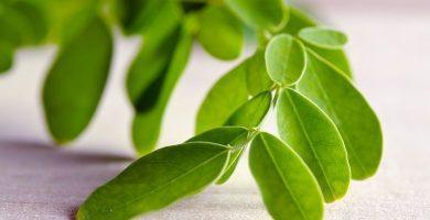 Moringa: la planta que previene el cáncer y mejora el rendimiento sexual