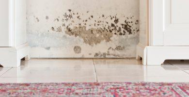 Cómo deshacerse del olor a humedad: 10 técnicas para mantener su casa siempre oliendo
