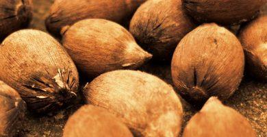 Aceite de babasú: 8 buenas razones para adoptar este producto en tu vida diaria