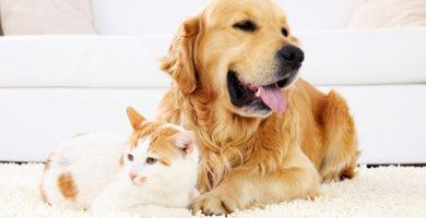 6 consejos de decoración para quien tiene mascota en casa