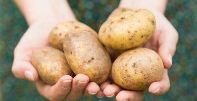 Patata: 22 formas de usarla más allá de la cocina